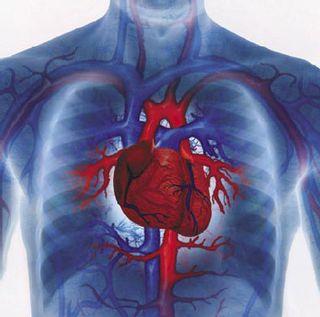 Heartstructure